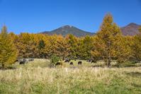 山梨県 秋の八ヶ岳牧場