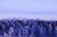 長野県塩尻市 高ボッチ高原から望む朝日に染まる霧氷の樹林
