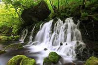 秋田県 新緑の元滝伏流水