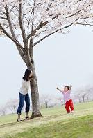桜の咲く公園で遊ぶ日本人親子