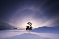 北海道 「春よ来い」の一本の木の日の出と日輪