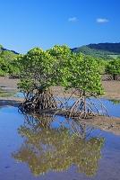 沖縄県 名蔵アンパル 名蔵川とマングローブ林 石垣島