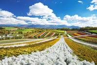 日本 北海道 十勝岳連峰と四季彩の丘