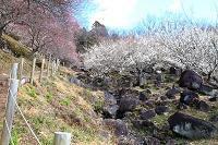 茨城県 つくば市 筑波梅林公園