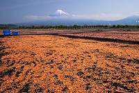 静岡県 富士川