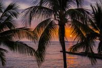 ハワイ パームツリーと夕日