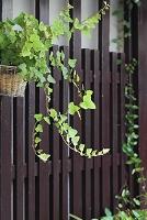 格子に掛けられた観葉植物