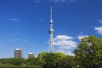 東京都 隅田公園より東京スカイツリー