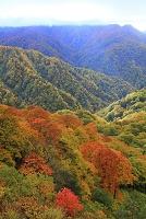 青森県 白神山地 天狗峠付近 紅葉