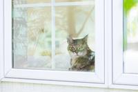 窓辺で寛ぐ猫