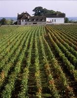 フランス ジュブレ・シャンベルタンのブドウ畑
