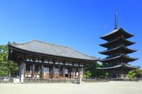 奈良県 春の興福寺
