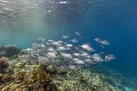 インドネシア コモド国立公園