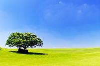 北海道 双子の木と芝生の丘