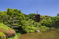 山口県 瑠璃光寺