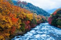 栃木県 日光市 竜頭の滝 紅葉