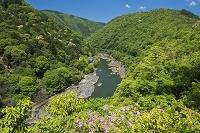京都府 亀山公園(嵐山公園)よりツツジと保津川