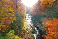 北海道 賀老高原 千走川とブナ林などの紅葉の夕景