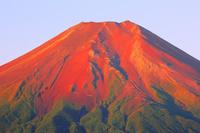 山梨県 朝日に染まる赤富士