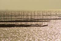 有明海の海苔網