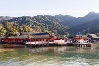 広島県 宮島 厳島神社
