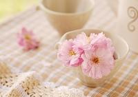 白い器に飾ったピンクの八重桜の花