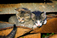 積み重なった薪の隙間にいる子猫
