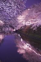 大岡川のライトアップ