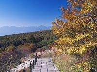 山梨県 紅葉の美し森より南アルプス
