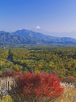 山梨県 紅葉の美し森より富士山