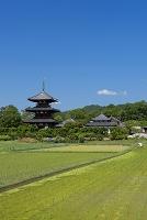 奈良県 法起寺三重塔の斑鳩の里