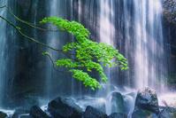 日本 福島県 逹沢不動滝