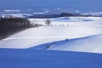 北海道 美瑛町 陰影のある丘
