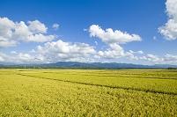 新潟県 田園と五頭連峰