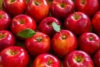 果物 リンゴ 紅玉