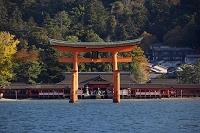 広島県 宮島・大鳥居と厳島神社