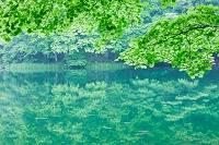 青森県 蔦野鳥の森