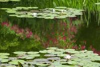 高知県 モネの庭マルモッタン
