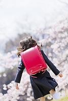 桜の咲く公園を走るランドセル姿の新一年生の後ろ姿