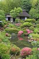 京都府 春の等持院