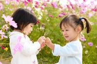 コスモス畑で遊ぶ日本人の女の子