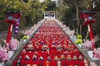 千葉県 かつうらビッグひな祭り