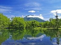 北海道 倶知安町 羊蹄山と姿見池