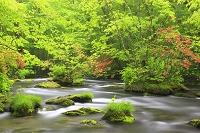 青森県 奥入瀬渓流の三乱の流れ