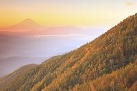 山梨県 櫛形山 朝焼けの富士山と黄葉の山並み