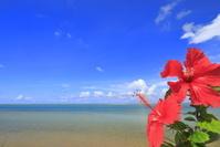 沖縄県 海とハイビスカス