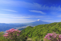 山梨県 三ツ峠山 残雪, 富士山と新緑の山並みとミツバツツジ
