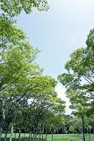 和泉市 公園の緑の樹木