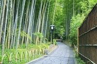静岡県 伊豆市 修善寺温泉 竹林の小径