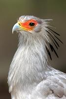 南アフリカ 鳥